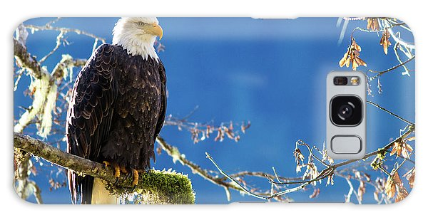 Backlit Bald Eagle In Squamish Galaxy Case