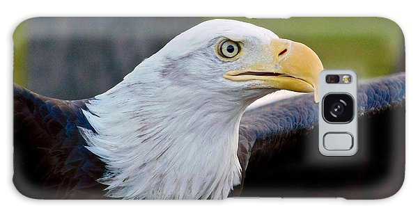 Galaxy Case featuring the photograph Bald Eagle by Dan Miller