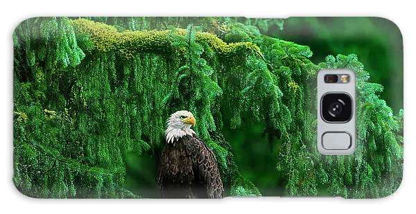 Bald Eagle In Temperate Rainforest Alaska Endangered Species Galaxy Case