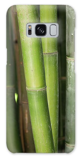 Bamboo Stalk 4057 Galaxy Case