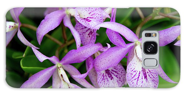 Bc Maikai 'louise' Orchid Galaxy Case