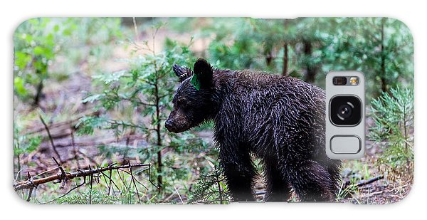 Kings Canyon Galaxy Case - Bear In Sequoia National Park by Oscity