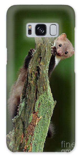 Breast Galaxy Case - Beech Marten, Martes Foina, With Clear by Ondrej Prosicky