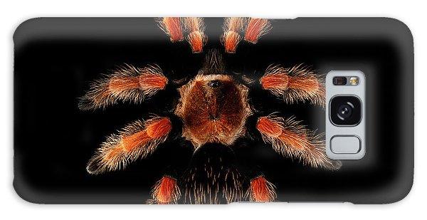 Big Spider Brachypelma Boehmei Galaxy Case