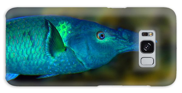 Bird Wrasse Galaxy Case