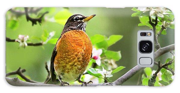 Birds - American Robin - Nature's Alarm Clock Galaxy Case