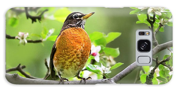 Birds - American Robin - Nature's Alarm Clock Galaxy Case