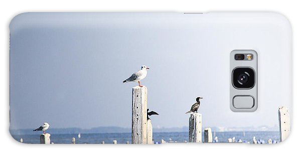 Seagulls Galaxy Case - Birds And Wildlife Concept - Seagull On by Dinfoto