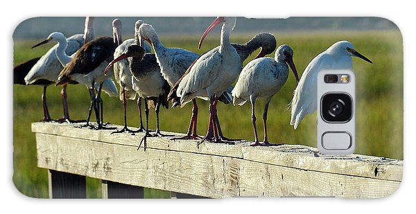 Birds Of A Different Feather In Jekyll Island's Marsh Galaxy Case