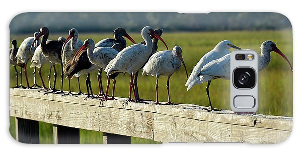 Birds Of A Feather On Jekyll Island Galaxy Case