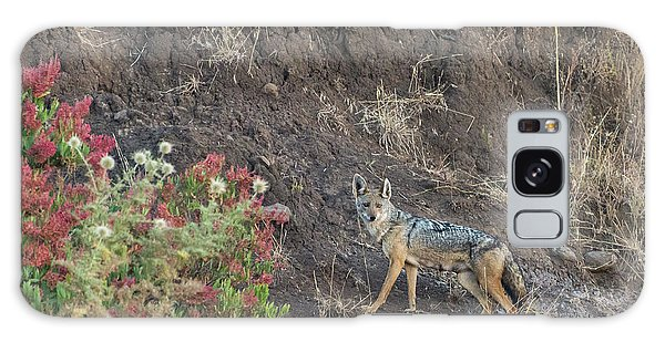 Galaxy Case featuring the photograph Black Backed Jackal by Alex Lapidus