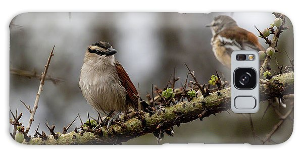 Black-crowned Tchagra And White-browed Scrub-robin Galaxy Case