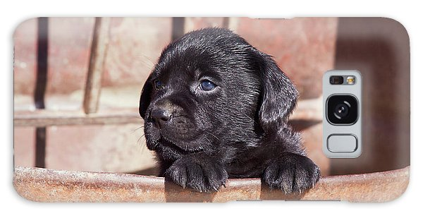 Chocolate Lab Galaxy Case - Black Labrador Retriever Puppy Peeking by Zandria Muench Beraldo