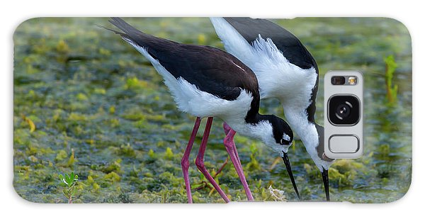 Black-necked Stilts Galaxy Case