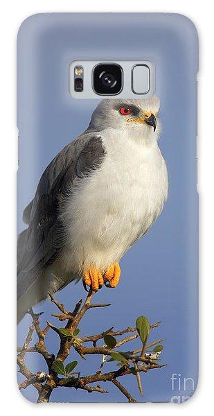 Perches Galaxy Case - Black-shouldered Kite - Elanus Caeruleus by Johan Swanepoel