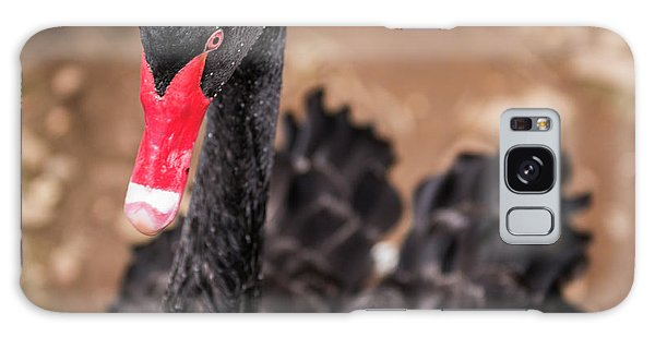 Galaxy Case featuring the photograph Black Swan by Rob D