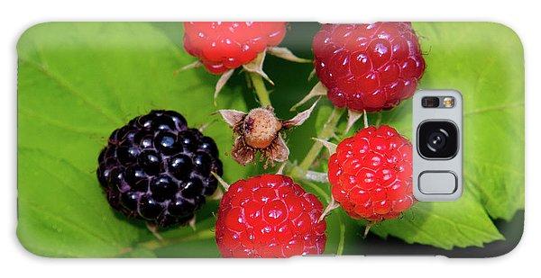 Blackberries Galaxy Case