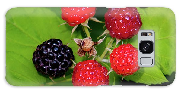 Blackberries Galaxy Case