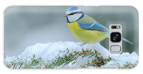 Perches Galaxy Case - Blue Tit, Cute Blue And Yellow Songbird by Ondrej Prosicky