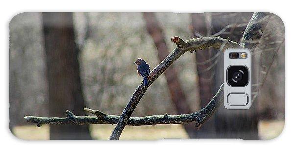 Bluebird, Bluebird, Sing To Me Galaxy Case