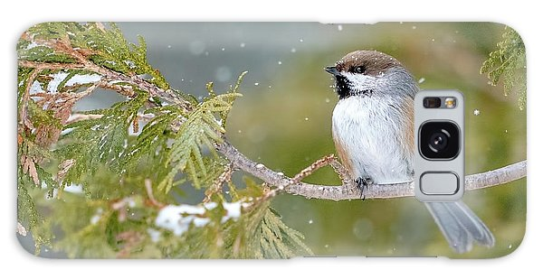 Boreal Chickadee In Winter Galaxy Case