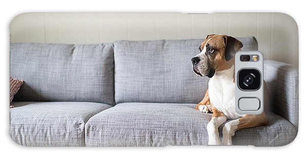 Patient Galaxy Case - Boxer Mix Dog Laying On Gray Sofa At by Anna Hoychuk