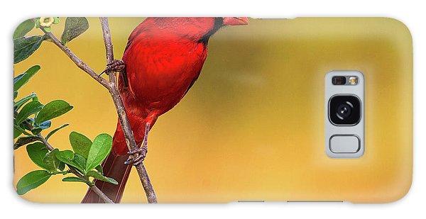 Bright Red Cardinal Galaxy Case