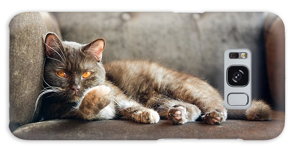 Claws Galaxy Case - British Cat At Home by Nina Anna
