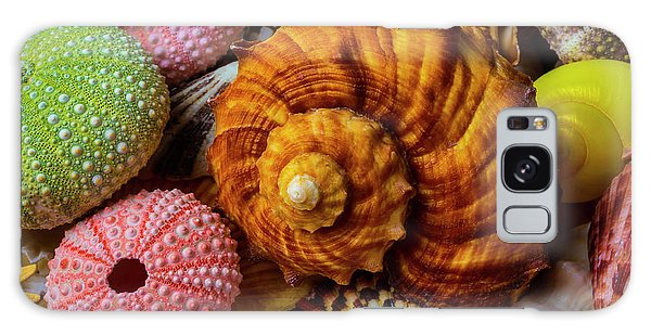 Sea Stacks Galaxy Case - Brown Sea Snail Shell And Urchins by Garry Gay
