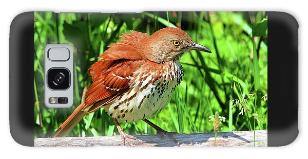 Brown Thrasher Galaxy Case