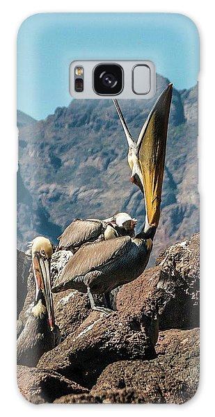 California Brown Pelicans In Ilsa Danzante Harbor Galaxy Case