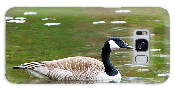 Gosling Galaxy Case - Canada Goose Square by Christina Rollo