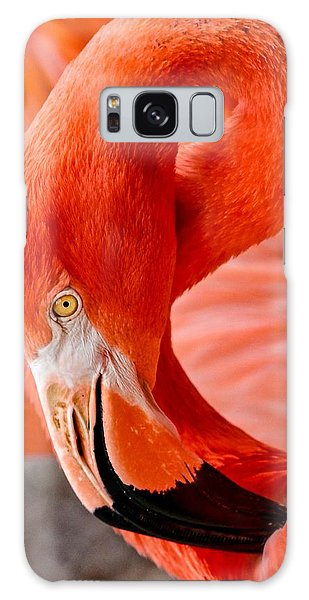 Caribbean Flamingo Galaxy Case