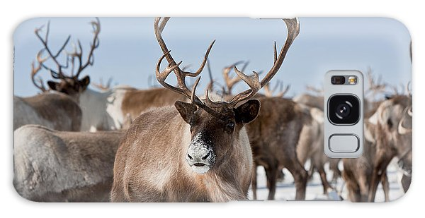 Pasture Galaxy Case - Caribou Group On Pastures In The by Sergey Krasnoshchokov