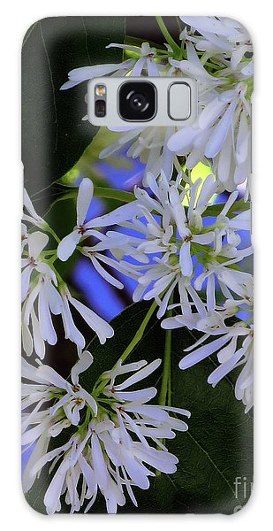 Galaxy Case featuring the photograph Carly's Tree - The Delicate Grow Strong by Rick Locke