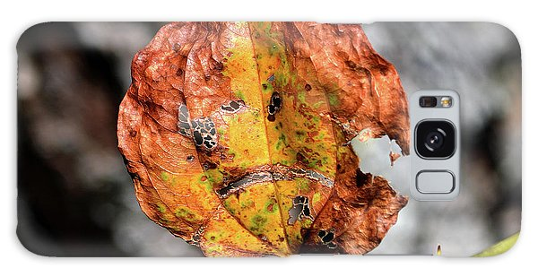 Galaxy Case featuring the photograph Carved Pumpkin Leaf At Gordon's Pond by Bill Swartwout Fine Art Photography