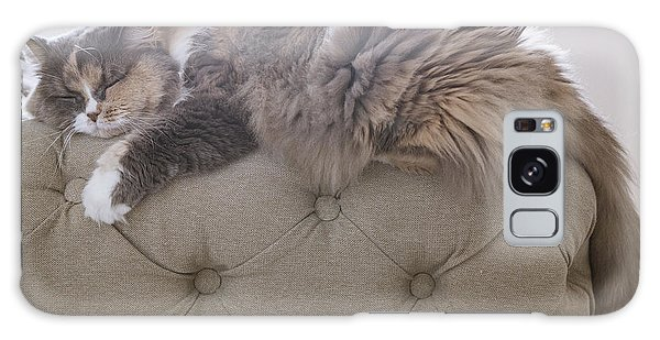 Furry Galaxy Case - Cat Sleeping On The Couch by Gipsy