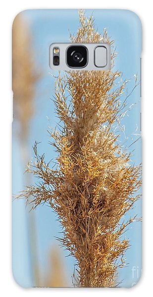 Cattail  Galaxy Case