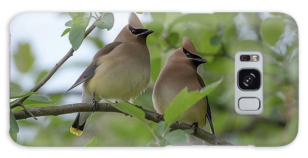 Cedar Waxwings Galaxy Case
