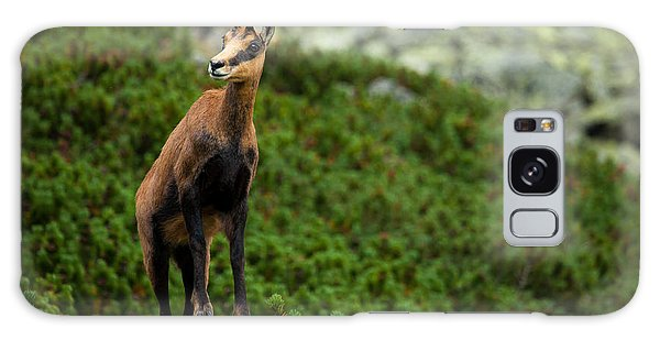 Scenery Galaxy Case - Chamois On The Top Of Rock In High by Losonsky