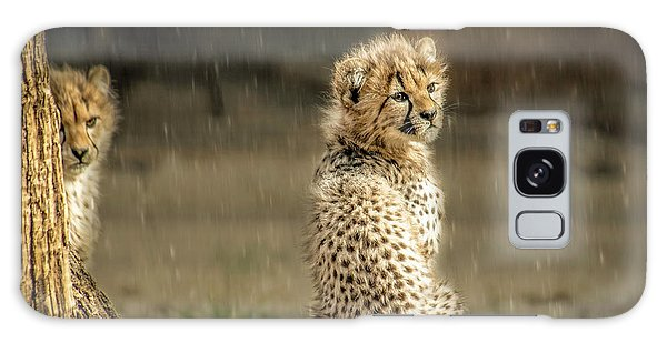 Cheetah Cubs And Rain 0168 Galaxy Case