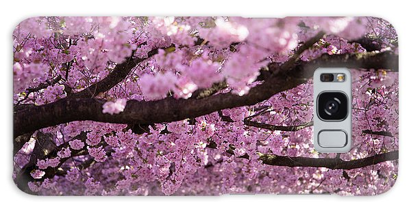 Blossoms Galaxy Case - Cherry Blossom Tree Panorama by Nicklas Gustafsson