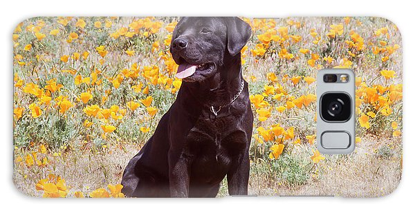 Chocolate Lab Galaxy Case - Chocolate Labrador Retriever Sitting by Zandria Muench Beraldo