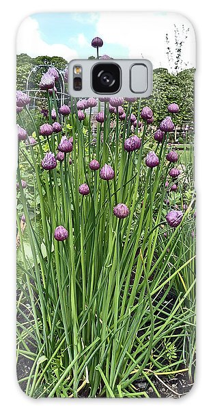 Chorley. Astley Hall. Walled Garden Chive Flowers. Galaxy Case