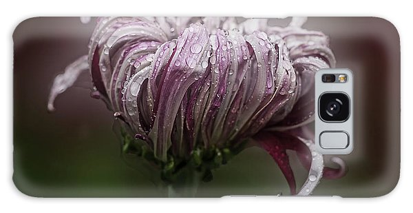 Chrysanthemum 'lily Gallon' Galaxy Case