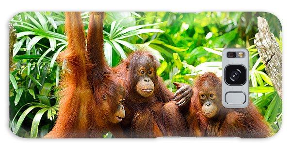 Furry Galaxy S8 Case - Close Up Of Orangutans, Selective Focus by Tristan Tan