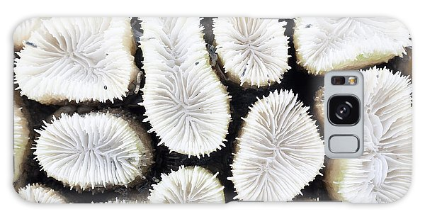 Natural Galaxy Case - Close-up Of White Coral by Stockhouse