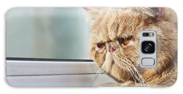 Furry Galaxy Case - Closeup Portrait Photo Of A Cpa Cat by Xiaojiao Wang