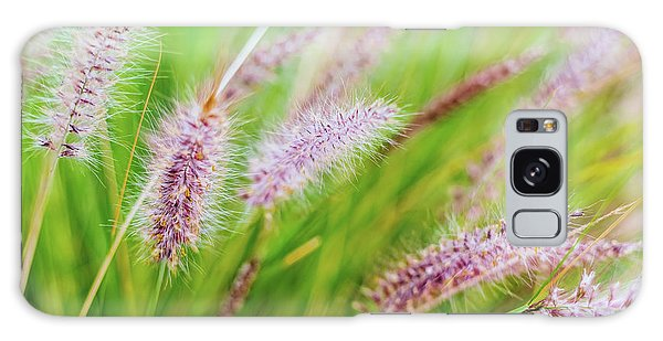 Colorful Flowers In Purple Spikes, Purple Fountain Grass, Close- Galaxy Case