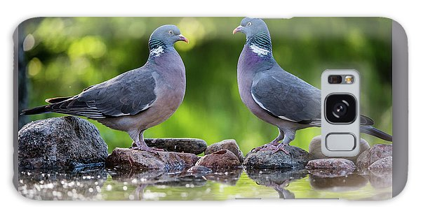 Common Wood Pigeons Meeting At The Waterhole Galaxy Case